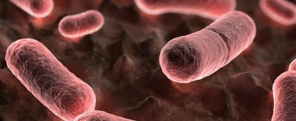 Vidéo Test de Plague Inc sur iPad: l'art de créer un virus pour exterminer la population